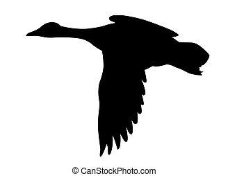 vector, silhouette, vliegen, eenden, op wit, achtergrond