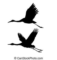 vector, silhouette, vliegen, kranen