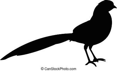 vector, silhouette, vogel
