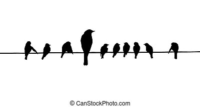 vector, silhouettes, draad, vogels