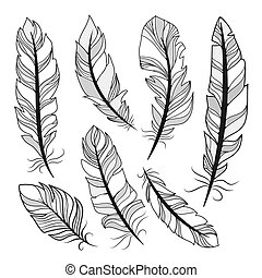 vector silhouettes feathers - silhouettes feathers on white...