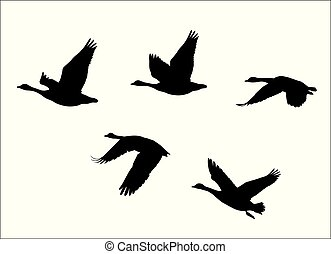 vector silhouettes of flock of flying canadian geese Canada Goose