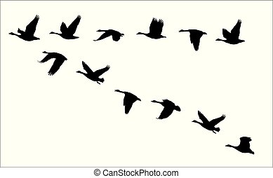 flying canadian geese Canada Goose - vector silhouettes of ...