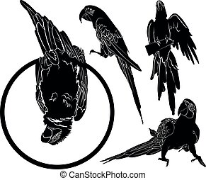 vector silhouettes of parrots birds collection