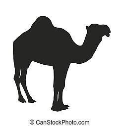 vector, silueta, camello