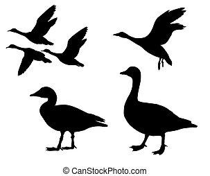 vector, silueta, plano de fondo, gansos, blanco
