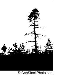vector, silueta, viejo, madera de pino, blanco, plano de...