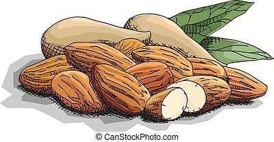 Vector simple illustration of nuts almonds. - Vector...