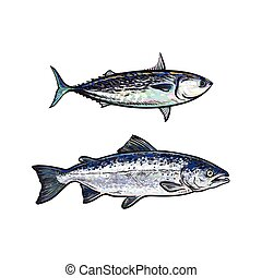 vector sketch cartoon sea fish salmon, tuna set