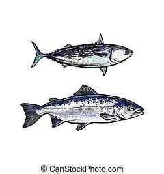 vector sketch cartoon sea fish salmon, tuna set