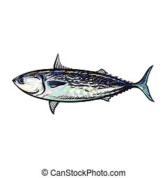 vector sketch cartoon sea fish tuna isolated