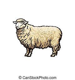 vector sketch cartoon style sheep isolated - vector sketch...
