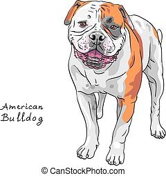 vector sketch dog American Bulldog breed