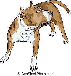 sketch of the dog American Staffordshire Terrier breed