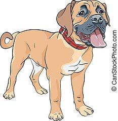 vector sketch dog Boerboel breed