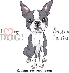 vector sketch dog Boston Terrier breed serious