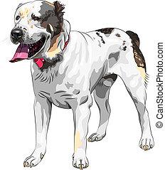 vector sketch dog Central Asian Shepherd Dog breed