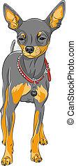 vector sketch dog Chihuahua breed