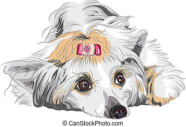 vector sketch dog Chinese Crested breed - close-up portrait...
