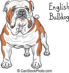 vector sketch dog English Bulldog breed