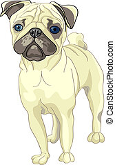 vector sketch dog fawn pug breed - color sketch of the dog...
