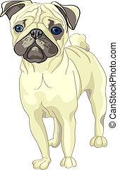 vector sketch dog fawn pug breed