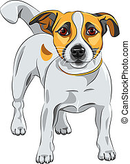 vector sketch dog Jack Russell Terrier breed