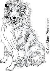 Vector sketch dog Rough ?ollie breed hand drawing vector -...