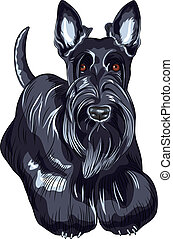 vector sketch dog Scottish Terrier breed standing - color...