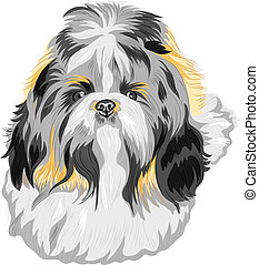 vector sketch dog Shih Tzu breed - color sketch of the dog ...