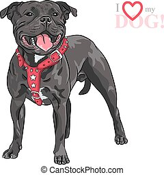 vector sketch dog Staffordshire Bull Terrier breed