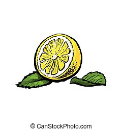 vector sketch half of ripe lemon with leaves