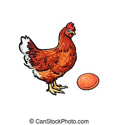 vector sketch hand drawn chicken, egg isolated