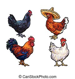 vector sketch hand drawn chicken set isolated