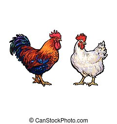 vector sketch hand drawn rooster set isolated