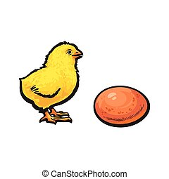 vector sketch hand drawn yellow chick and egg