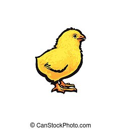 vector sketch hand drawn yellow chick isolated