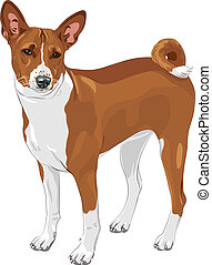 vector sketch hunting dog Basenji breed