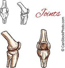 Vector sketch icon of human knee or elbow joints - Human...