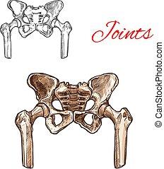 Vector sketch icon of human pelvis bones or joints - Human ...