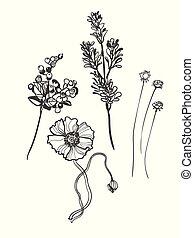 vector sketch illustration design elements plant berries branch