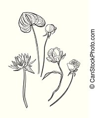 vector sketch illustration design elements plant isolated