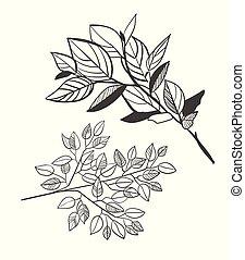 vector sketch illustration design elements plant laurel