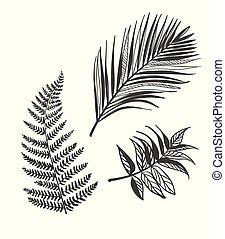 vector sketch illustration design elements plant leaves palm fern