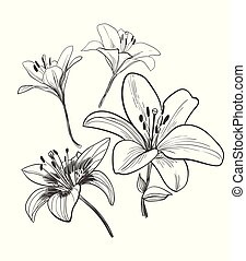 vector sketch illustration design elements plant lily flower
