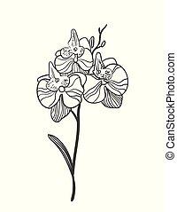 vector sketch illustration design elements plant orchid
