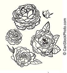vector sketch illustration design elements plant peony rose