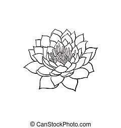 vector sketch lotus flower blossom blooming