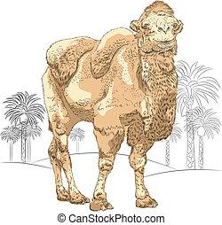 vector sketch of Bactrian camel in the desert