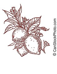 Vector Sketch of lemon